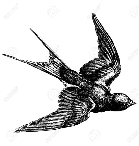 Drawing Of A Flying Bird - DRAWING ART IDEAS