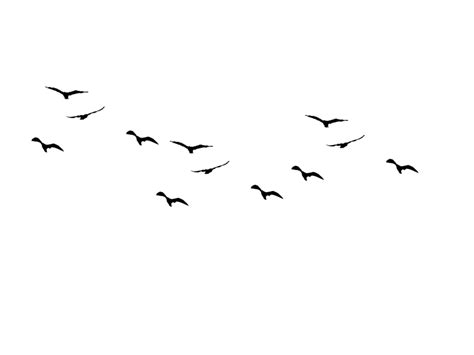 Drawing Of Birds Flying - ClipArt Best