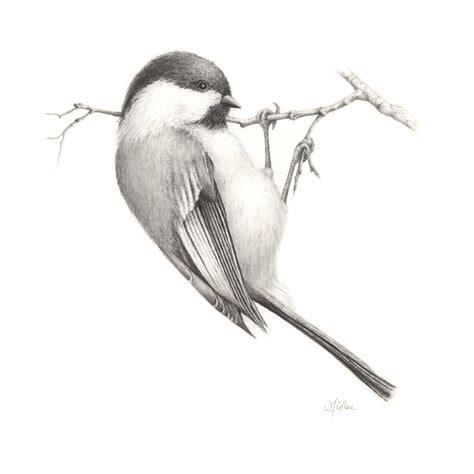 Drawn bird pencil drawing   Pencil and in color drawn bird ...
