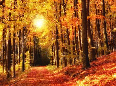 Dreamy Autumn wallpaper – Conservatives Declare War on ...