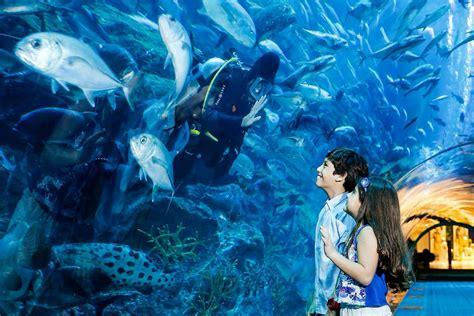 Dubai Aquarium & Underwater Zoo, Dubai   RueBaRue