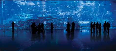 Dubai Aquarium & Underwater Zoo | Emaar Entertainment