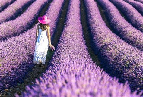 Dulce Provenza francesa | El Viajero | EL PAÍS