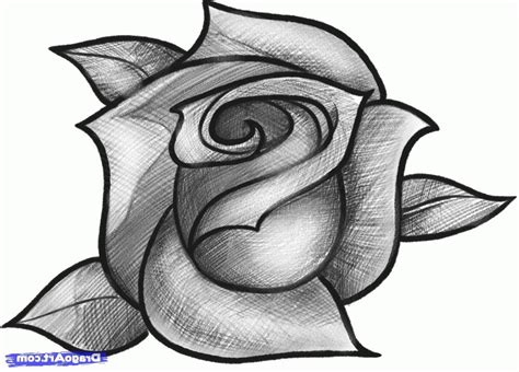 Easy Pencil Drawing Of Rose   Drawing Sketch Galery
