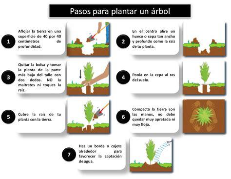 eco aventura puebla: ¿Cómo sembrar un árbol?
