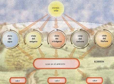 Ecología y Educación Ambiental (página 2) - Monografias.com