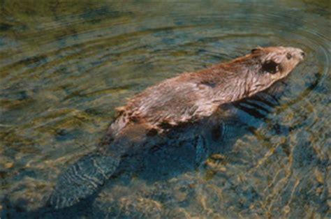 Ecosistemas de agua dulce, animales y plantas que viven en ...
