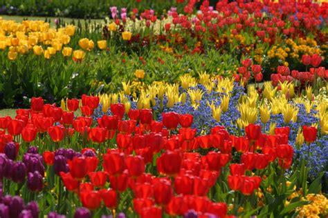 Edging design ideas: Designs For Garden Flower Beds