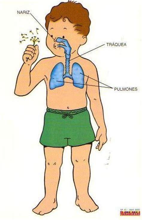 Educarchile - Sistema respiratorio
