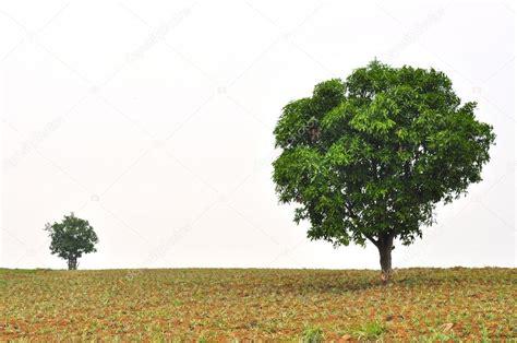 een kleine en grote boom met nieuwe blad groei staande in ...