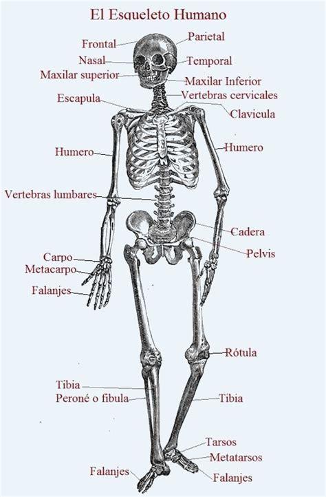 Ejemplos Cortos De Biografias - printablehd