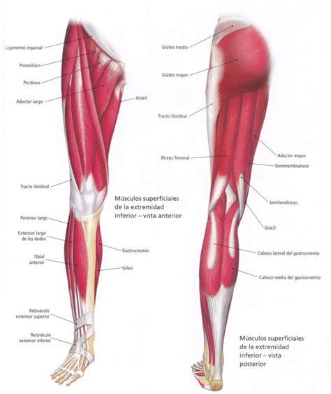 Ejercicio extremidad inferior: Extensión de piernas ...