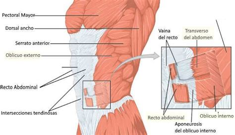 Ejercicios para perder barriga: la estrategia definitiva ...