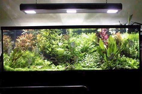 El Acuarista>Secciones>La iluminación en el acuario con ...