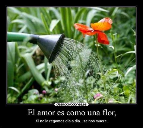 El amor es como una flor,   Desmotivaciones