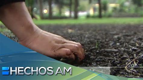 ¿El antojo de comer tierra mojada implica tener parásitos ...