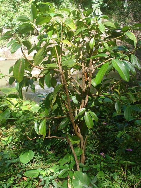 El árbol de la canela - pisos Al día - pisos.com