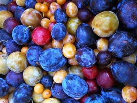 El Árbol que da 40 tipos de frutos diferentes
