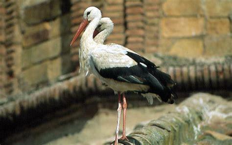 El aumento de temperatura trae a España nuevas aves ...