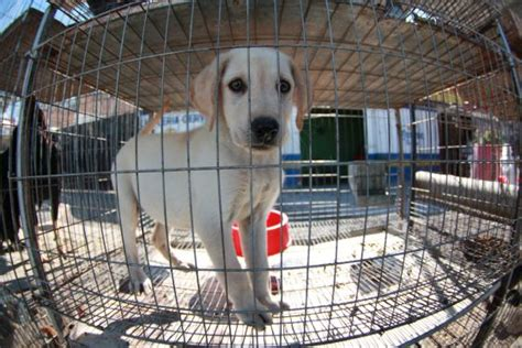 El Ayuntamiento cierra una tienda de mascotas por maltrato ...