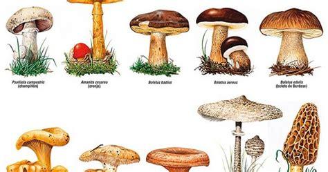 El blog de  Acebedo : Setas y hongos  Curiosidades