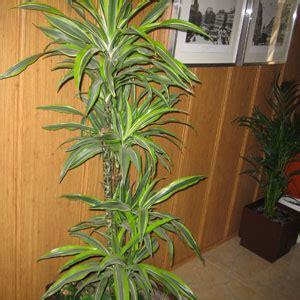 El blog de cibergarden: Plantas descontaminantes para el ...