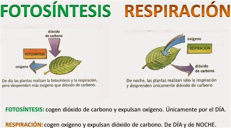 El blog de Lloreu 5ºC Welcome!! : La fotosíntesis y la ...