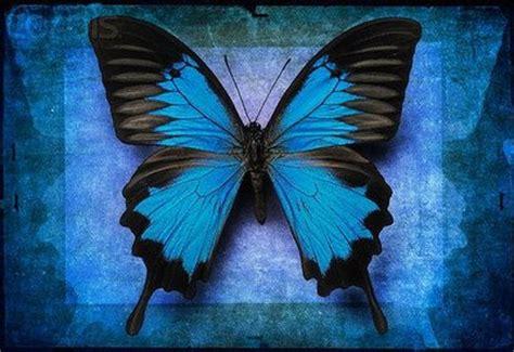 El Blog de Sibyla: Los sueños son como mariposas azules