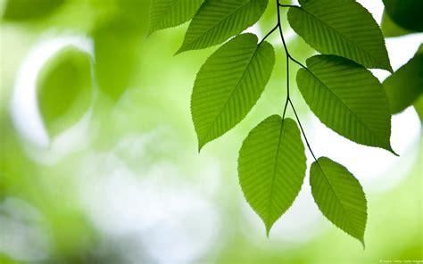 El cambio de color de las hojas