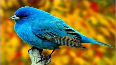 El canto de las aves tiene información del clima - Ciudad ...