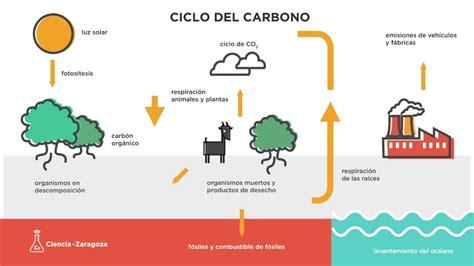 El ciclo del carbono - YouTube