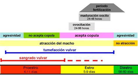 El ciclo sexual de la perra y la llegada a la pubertad ...