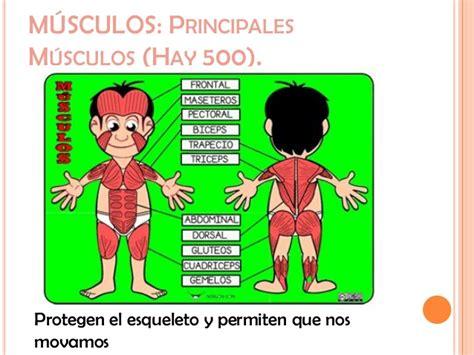 El cuerpo humano power ticplataforma 22
