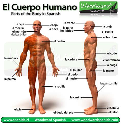 El cuerpo humano y sus partes en español con fotos   Parts ...