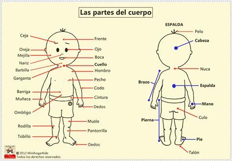 El cuerpo humano y sus partes en inglés y castellano   Imagui