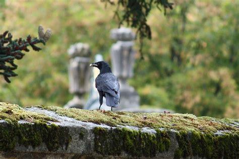El cuervo que llevó el pan a San Antón - Aceytuno