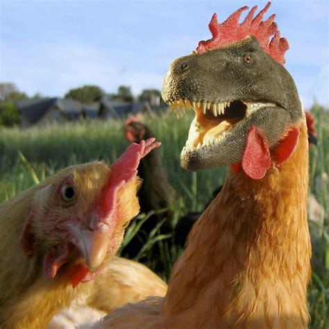 El dinosaurio que se volvió gallina   Revista C2