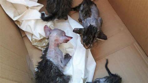 El dueño de un restaurante roció con ácido a unos gatos ...