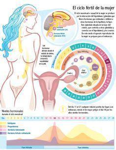El Embarazo | Embarazo | Pinterest | El embarazo, Embarazo ...