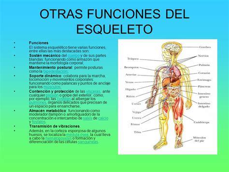 EL ESQUELETO HUMANO.   ppt video online download