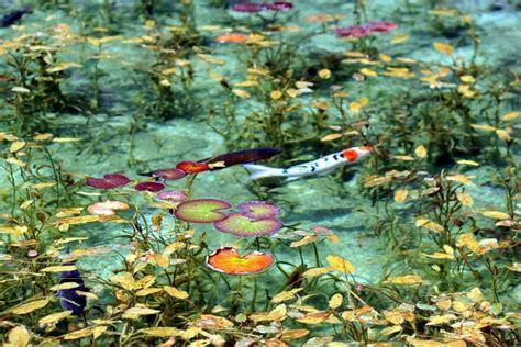 El estanque de Monet en Japón - Guia de jardin