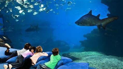 El gran tiburón blanco en el acuario de Sevilla