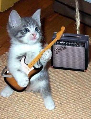 ¡El heavy metal gatuno también existe! ;  #gatos #cats # ...