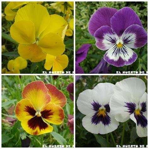 El huerto de Ramón: Flores de plantas ornamentales