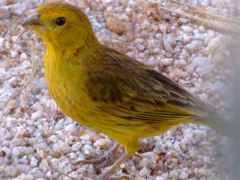 El lenguaje de los canarios – Pixela: Blog del Aula ...