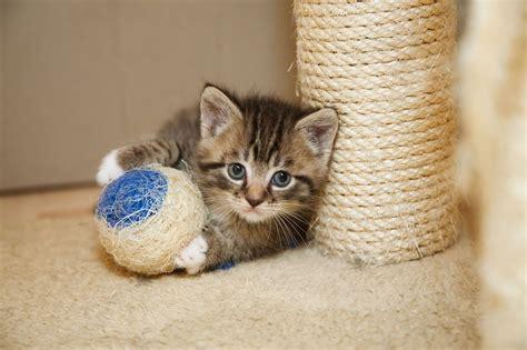 El mejor rascador para gatos. Comparativa & Guia de compra ...