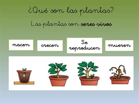 El mundo de las plantas