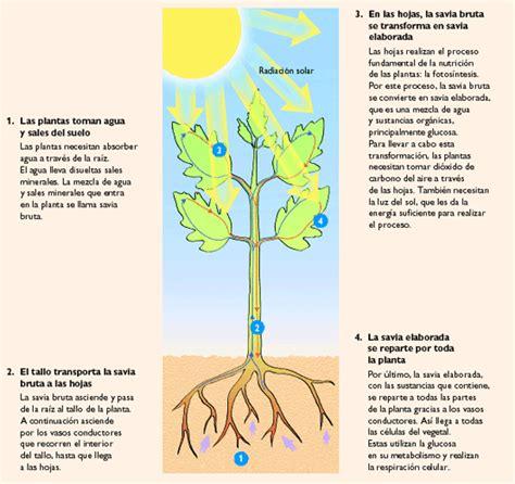 El mundo de las plantas: NUTRICION EN LAS PLANTAS ...