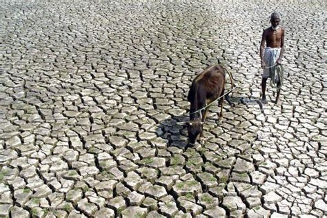 El Nino's return raises spectre of food inflation spike in ...