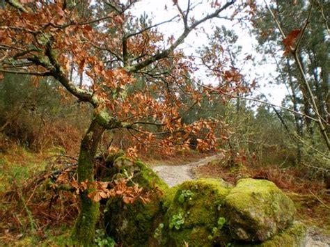 El otoño. Vocabulario en imágenes.